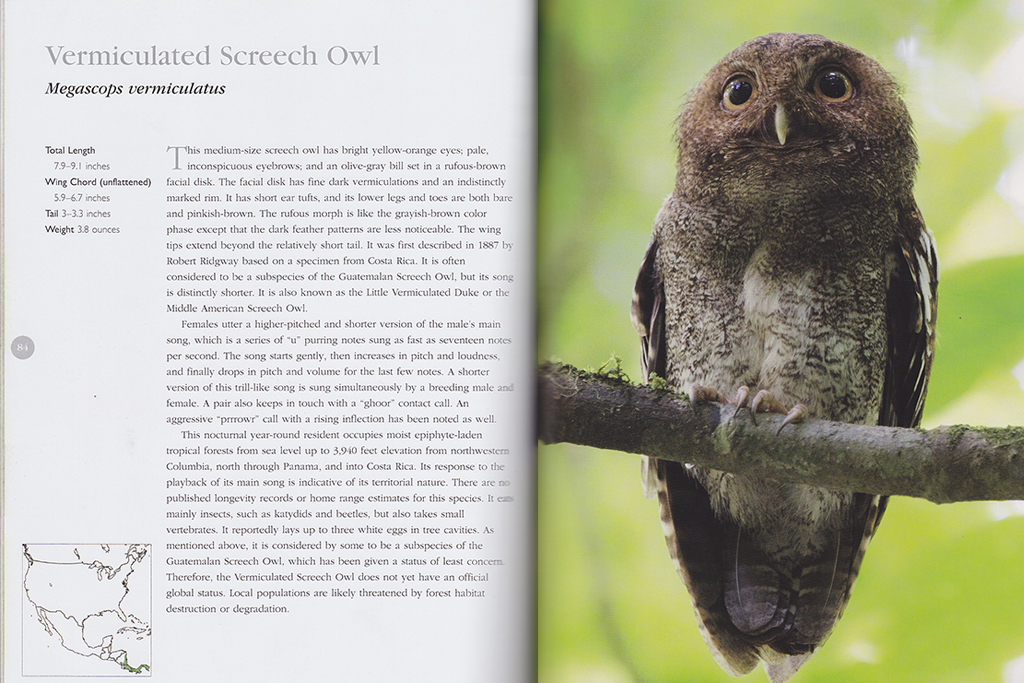Vermiculated Screech Owl in the Book