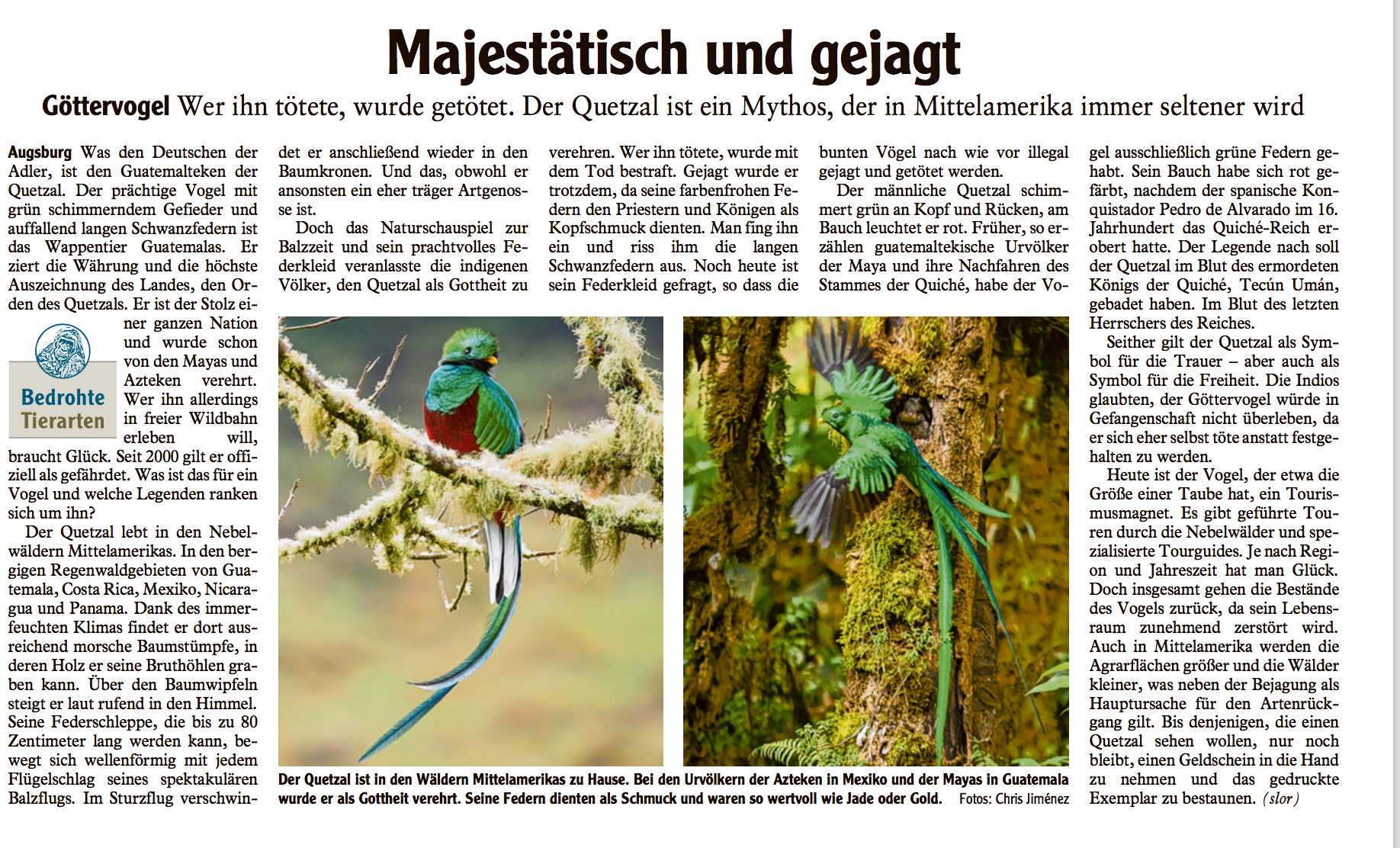 Resplendent Quetzal at the Augsburger Allgemeine